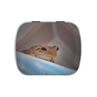 tree frog looking at viewer on blue jelly belly tins