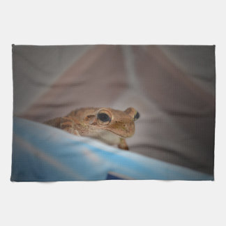 tree frog looking at viewer on blue kitchen towel
