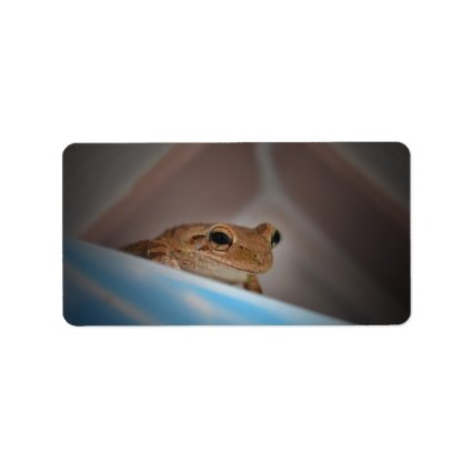 tree frog looking at viewer on blue personalized address label