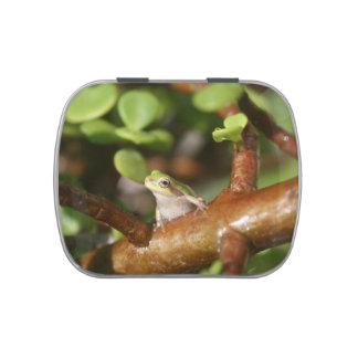 tree frog looking sideways in bonsai tree photo jelly belly tin