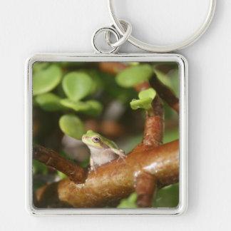 tree frog looking sideways in bonsai tree photo key chain