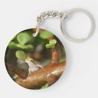 tree frog looking sideways in bonsai tree photo acrylic key chains