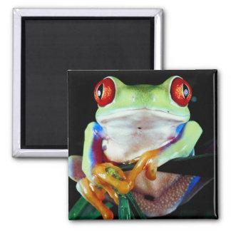 Tree Frog Magnet