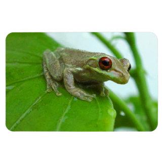 Tree frog on leaf Flexi Magnet