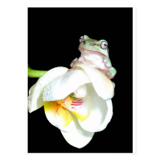 tree frog on orchid postcard