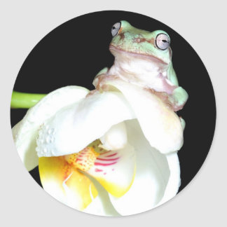 tree frog on orchid sticker