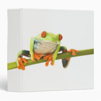Tree frog on stem 3 ring binder