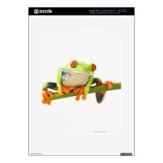 Tree frog on stem iPad 3 decals