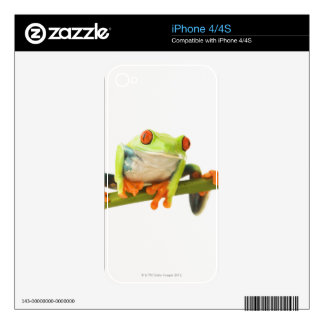 Tree frog on stem iPhone 4 skins