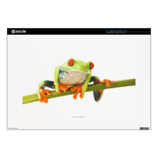 Tree frog on stem laptop decal