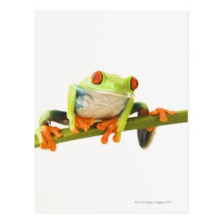 Tree frog on stem postcard