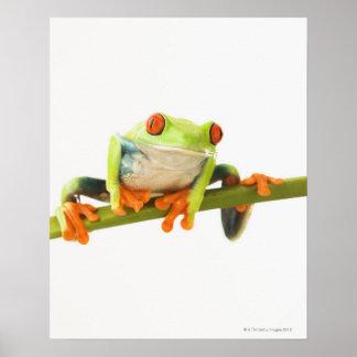 Tree frog on stem poster