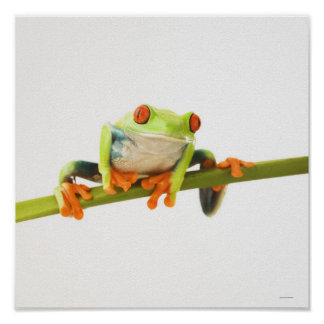 Tree frog on stem poster