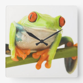 Tree frog on stem square wall clock