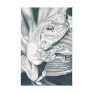 Tree frog - pencil drawing canvas print