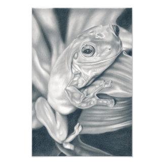 Tree frog - pencil drawing photo print