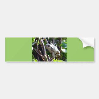 Tree Frog Photo by E.L.D. Bumper Sticker