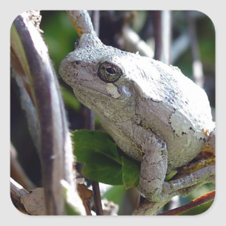 Tree Frog Photo by E.L.D. Square Stickers