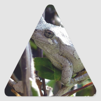 Tree Frog Photo by E.L.D. Triangle Stickers