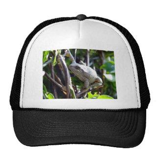Tree Frog Photo by E.L.D. Trucker Hat