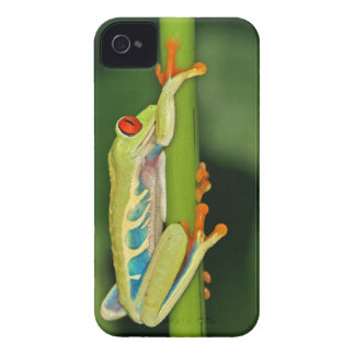 Tree Frog Photo iPhone 4 Cover