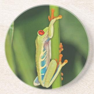 Tree Frog Photo Coasters