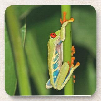 Tree Frog Photo Beverage Coaster