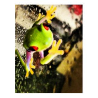 Tree frog photo design postcard