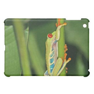 Tree Frog Photo Cover For The iPad Mini