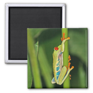 Tree Frog Photo Fridge Magnets