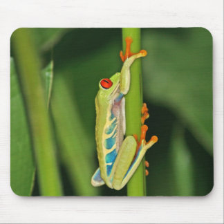 Tree Frog Photo Mouse Pad