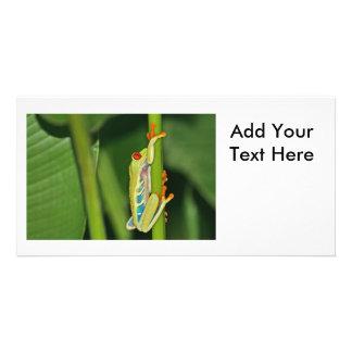 Tree Frog Photo Photo Greeting Card