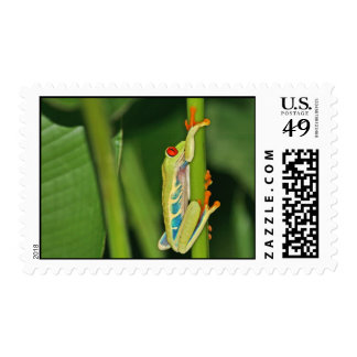 Tree Frog Photo Stamps
