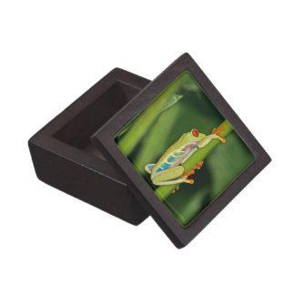Tree Frog Photo Premium Jewelry Boxes