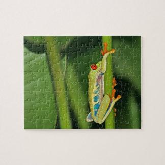Tree Frog Photo Jigsaw Puzzles