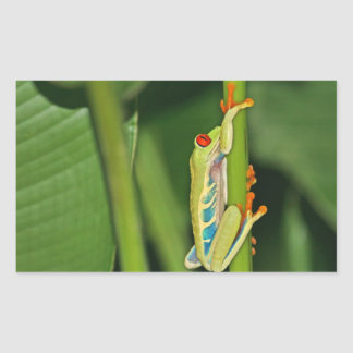 Tree Frog Photo Rectangle Stickers