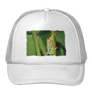 Tree Frog Photo Trucker Hats
