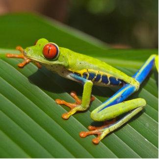 Tree Frog Standing Photo Sculpture