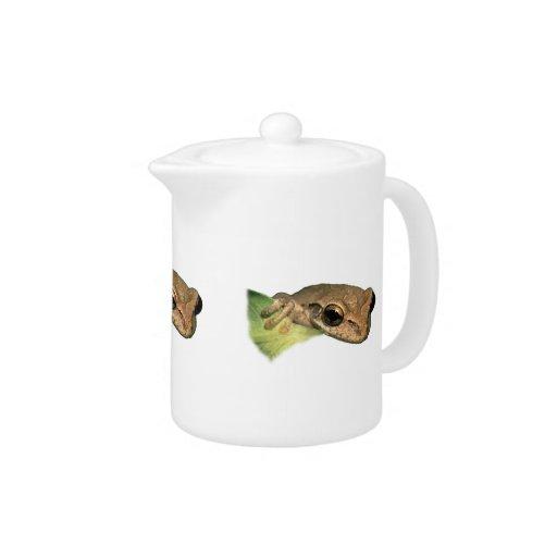 tree frog portrait