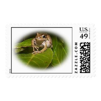Tree Frog Postage