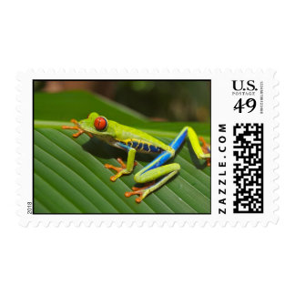 Tree Frog Postage Stamps