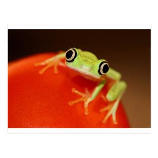 tree frog postcard