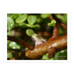 Tree frog ready to spring out of bonsai tree postcard