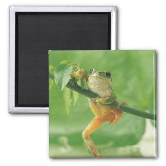 Tree Frog Refrigerator Magnet