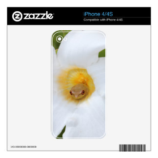 Tree Frog Resting in Flower iPhone 4S Decals