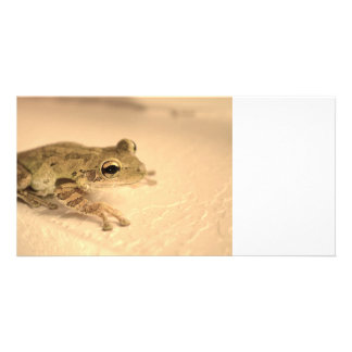 tree frog sepia looking right animal image photo card