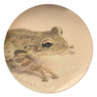 tree frog sepia looking right animal image dinner plate