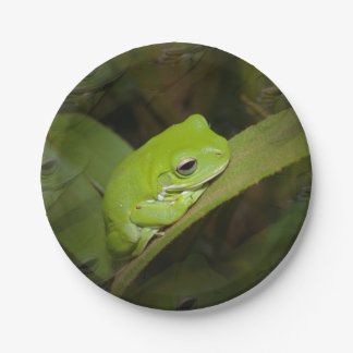 Tree Frog 7 Inch Paper Plate