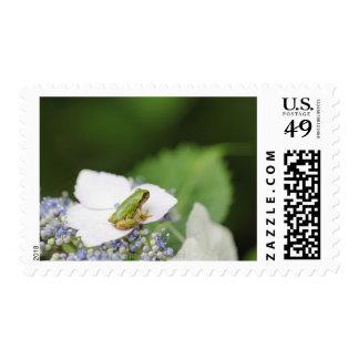 Tree Frog Sitting on a Hydrangea, Hyogo Postage Stamp