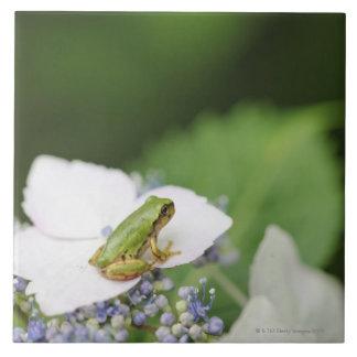 Tree Frog Sitting on a Hydrangea, Hyogo Tile